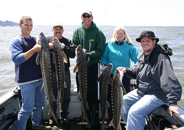 a limit of sturgeon caught fishing in the astoria estuary with guide Lance Fisher