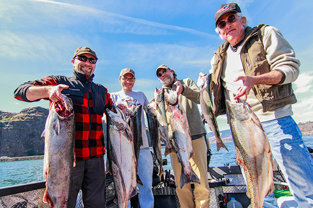 A photo of a limit of Salmon caught on the Columbia River while fishing with guide, Lance Fisher
