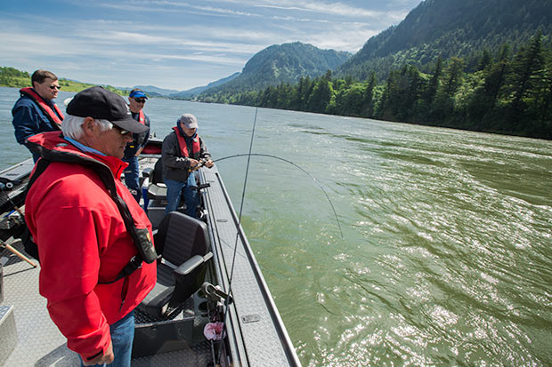 Columbia river salmon springers wait i mean summers for Columbia river salmon fishing
