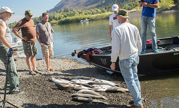 a big pile of klickitat coho laying on a gravel beach