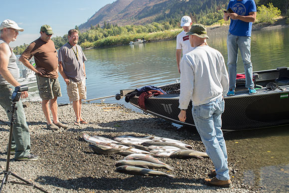 Klickitat river coho great end to the columbia river season for Salmon fishing columbia river