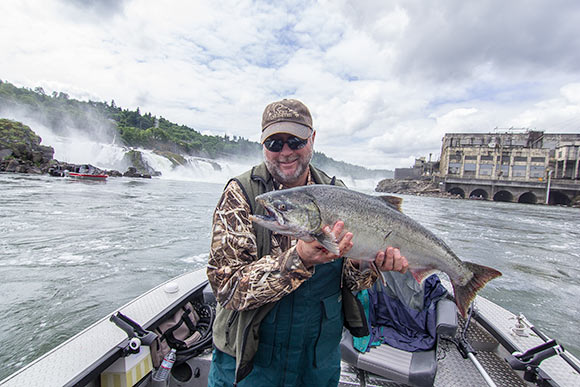 a portland area spring chinook caught below oregon city falls