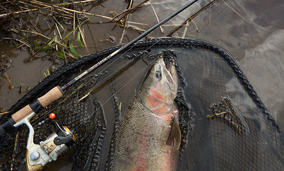 a nice steelhead on the bank next to a g. lloomis rod and shimano reel
