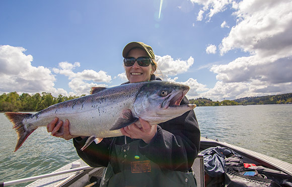 Willamette river fishing salmon run building steam for Willamette river fishing report