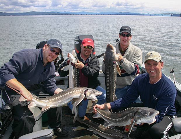 A really nice limit of keeper sturgeon caught on a fishing charter in Astoria with guide, Lance Fisher