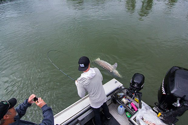 Willamette river sturgeon out of portland lance fisher for Fishing in portland oregon