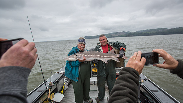 Big sturgeon from the Astoria estuary on the Columbia River