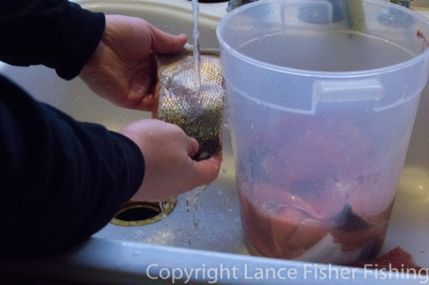 Rinsing the salmon after soaking in brine.