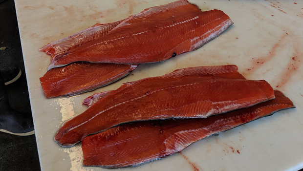 Beautiful Chinook Salmon Fillets