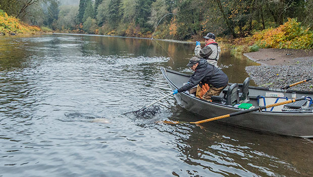 netting a fall salmon out of a drift boat on a Northern Oregon Coast river