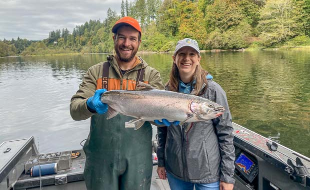 Hatchery Coho Salmon on the Lewis River