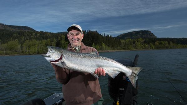 Beautiful Columbia River Spring Chinook Salmon